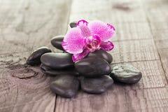 紫红色的蝴蝶兰和黑石头在被风化的甲板 库存照片