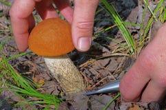 红色盖帽蘑菇 库存照片