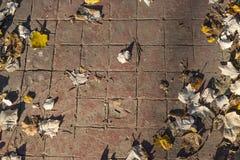红色盖瓦自然被盖印的混凝土路面室外地板装饰出现  免版税库存图片