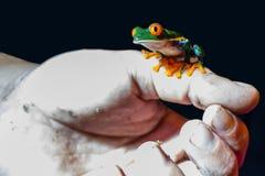 红色眼睛雨蛙在手边 免版税库存图片
