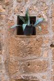 红色石墙和植物 库存图片
