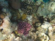 红色礁石海运 库存照片