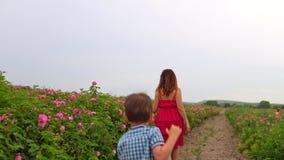 红色礼服步行的妇女在开花的玫瑰园里 影视素材