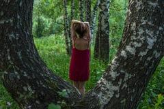 红色礼服的俏丽的女孩在山的一个夏天森林里 免版税库存照片