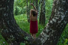 红色礼服的俏丽的女孩在山的一个夏天森林里 库存照片