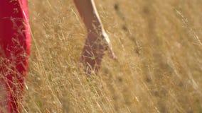 红色礼服的秀丽妇女在日落的森林里 妇女` s手特写镜头  女孩接触草的` s手和享用 股票视频