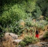 红色礼服身分的女孩在植物和大鹏围拢的领域 免版税库存图片