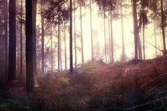 红色神秘的黑暗的森林风景 免版税库存照片