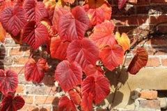 红色秋叶对红砖墙壁 免版税库存图片