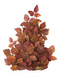 红色秋叶的创造性的构成 查出在白色 库存照片