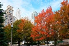红色秋叶,芝加哥 库存图片