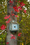 红色秋天叶子包围的小的蓝色鸟议院 免版税图库摄影