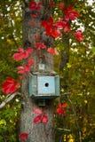 红色秋天叶子包围的小的蓝色鸟议院 免版税库存图片