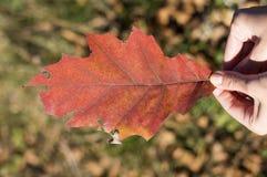 红色秋天叶子在户外女孩手上 免版税库存图片