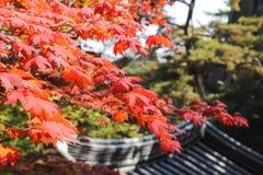红色秋天树在北汉山国立公园,汉城,韩国离开 免版税图库摄影