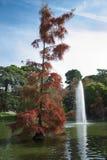 红色秋天树 图库摄影