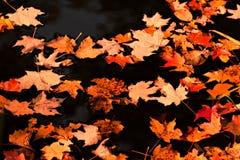 在水池的叶子 免版税库存图片