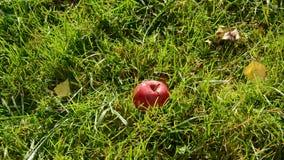 红色秋天苹果在草跌倒 影视素材