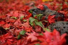 红色秋天 图库摄影