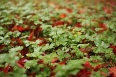 红色秋天 库存图片