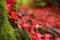 红色秋天 库存照片