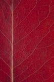 红色秋季叶子背景 免版税图库摄影