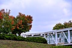 红色秋季叶子 免版税库存照片