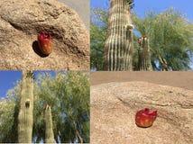 红色种子荚 免版税图库摄影