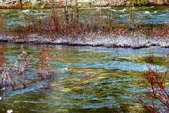 红色种植冬天雪冰Wenatchee河华盛顿 免版税库存照片