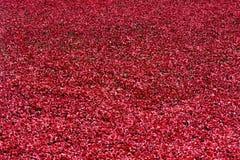 红色符号陶瓷鸦片-伦敦塔 免版税库存照片