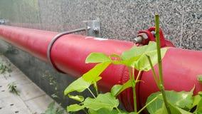 红色管子和绿色植物 免版税图库摄影
