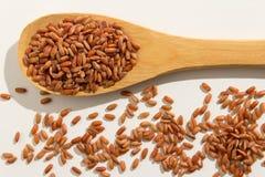 红色米种子 在一把木匙子的健康五谷 白色backgroun 免版税图库摄影
