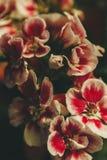 红色紫罗兰色花 免版税图库摄影