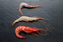 红色红色大虾、白色大虾和虾在黑暗的背景 免版税库存照片