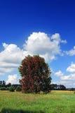 红色结构树 免版税库存图片