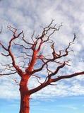 红色结构树 库存照片