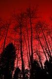 红色结构树 免版税图库摄影