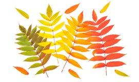 红色绿色黄色秋叶完全失败位置 免版税库存图片