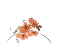 红色美丽的花 免版税库存图片