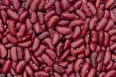 红色背景的豆 免版税库存照片