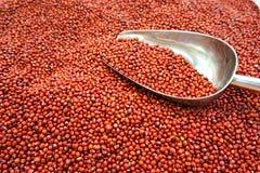 红色背景的豆 免版税库存图片