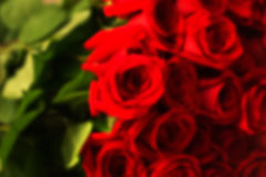 红色自然玫瑰花束 库存照片