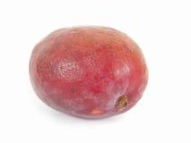 红色芒果 库存图片