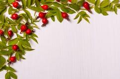 红色花、莓果和绿色的样式在白色离开  库存图片