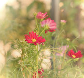 红色花、solf和blured焦点 库存照片