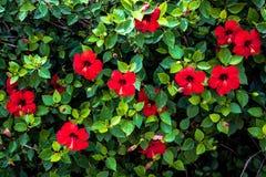 红色花卉背景,明亮地色 免版税库存照片