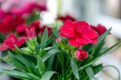 红色花和绿色叶子 免版税库存照片