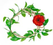 红色花和绿色叶子 库存照片