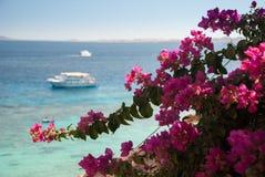 红色花和蓝色海洋有白色小船的 免版税库存图片