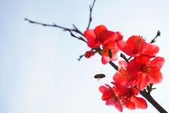 红色花和蜂在蓝天 库存照片